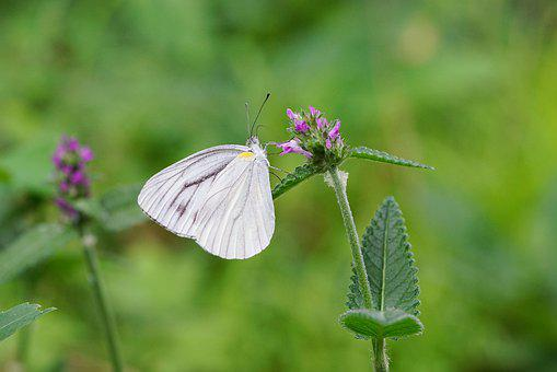 Butterfly, Flower, Bee, Nature, Insect, Insects, Plants