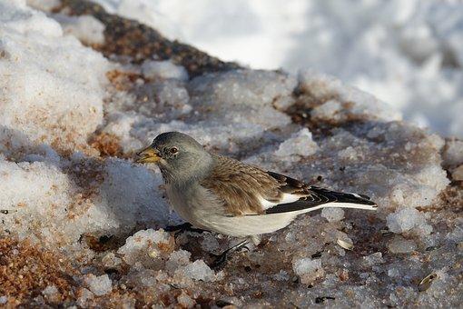 Bird, Snow, Nature, Winter