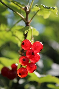 Berries, Currants, Fruit, Fruits, Currant, Healthy