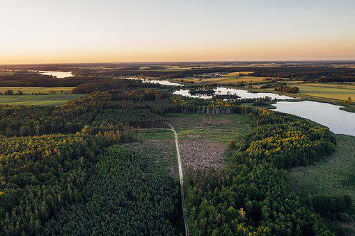 Drone, Aerial, Drone Photography, Aerial Shot, Forest