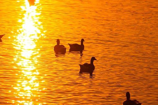 Ammersee, Bavaria, Sunset, Ducks, Family, Romance