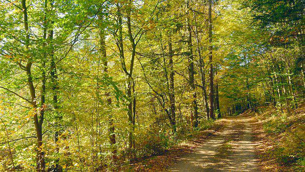 Forest Road, Autumn Forest, Autumn In The Forest