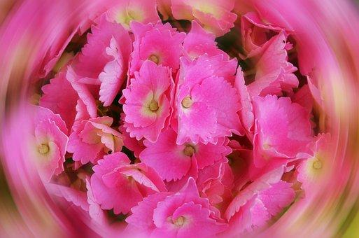 Hydrangea, Petals, Game, Fantasy, Dream, Flower