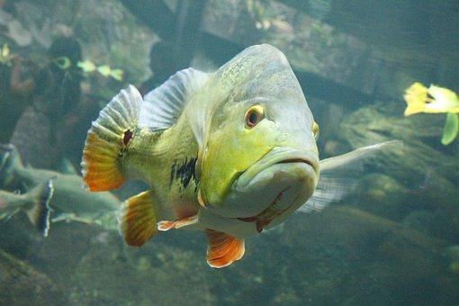 Fish, Aquarium, For Aquariums, And, However, Aquariums