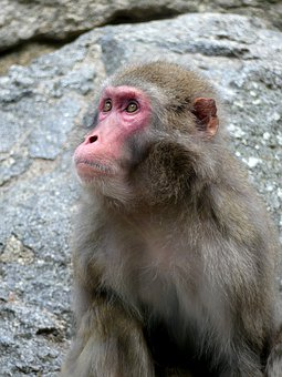 Monkey, Zoo, Animal, Animal World, Mammal, Portrait