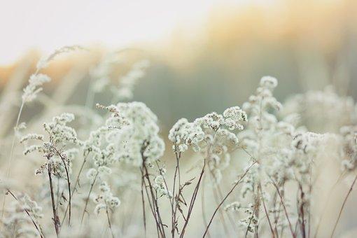 Abendstimmung, Nature, Sunset, Mood, Landscape