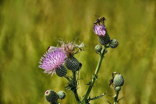 Bee, On, Flowers, Wildflowers, Meadow, Nature