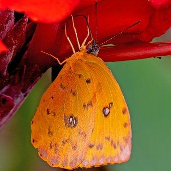 Ecuador, Rainforest, Butterfly, Tropics Butterfly