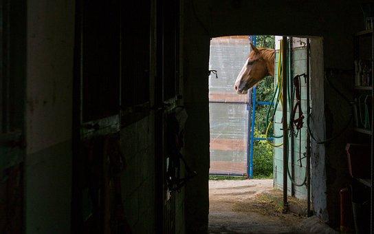 Horse, Riding School, Riding, Equine, Nature, Campaign