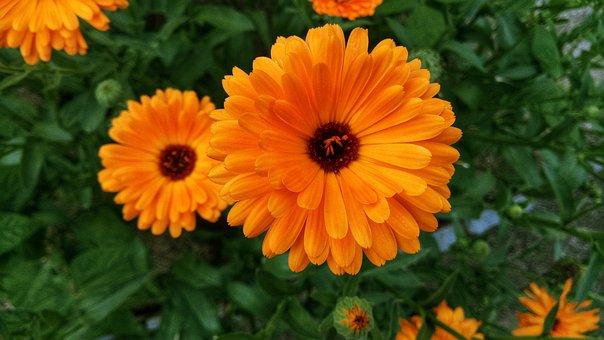 Flowers, Orange Flowers, Spring, Spring Flowers