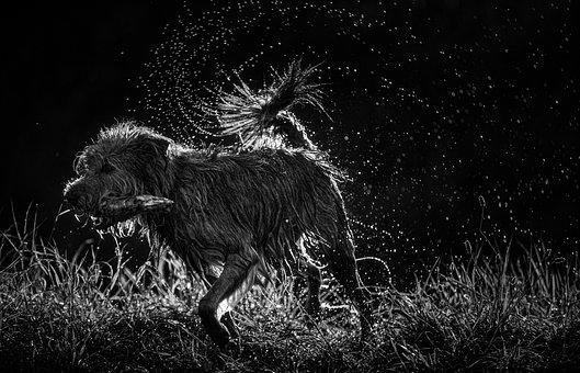 Dog, Water, Animal, Summer, Nature, Spray, Backlight