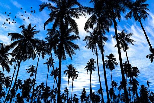 Nature, Tropical, Sea, Landscape, Summer, Take It Easy