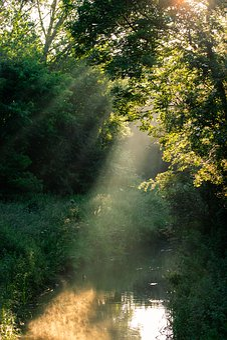 Sunrays Through Trees, Sun Rays, Light Rays, Stream