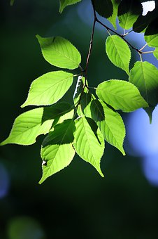 State Of The Union, Green, Leaf, Nature, The Leaves