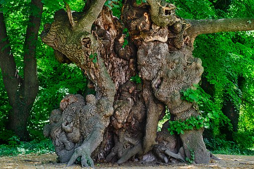 Tree, Old, Nature, Tribe, Log