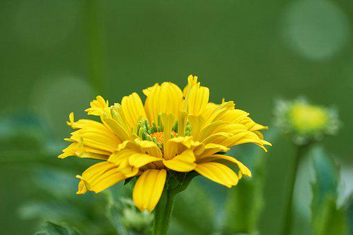Flower, Flourished, Yellow, Bloom, Summer, Spring