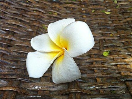 Flower, Sweetness, Almond Tree, Petals, Nature, White
