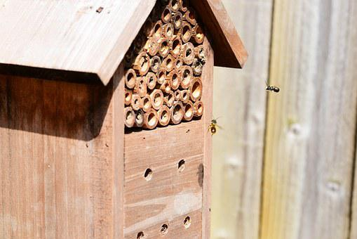 Insects In Flight, Bees, Flying, Insect House