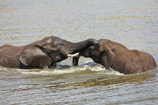 Elephants, Playing, Water, Exciting, Adventure, Safaris