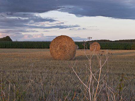 Straw, Field, Harvest, Nature, Agriculture, Autumn