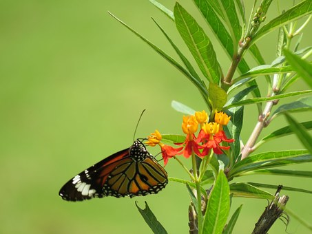 Butterfly, Flower, Nature, Blossom, Butterfly Park