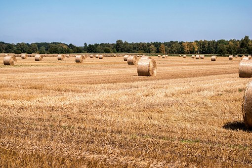 Straw, Straw Bales, Field, Harvest, Agriculture