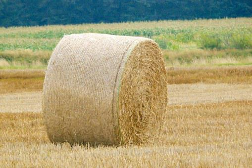 Hay Bales, Hay, Agriculture, Harvest, Bale, Round Bales