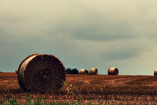 Land, Hay, Hay Bales, Bale, Harvest, Straw Bales, Straw