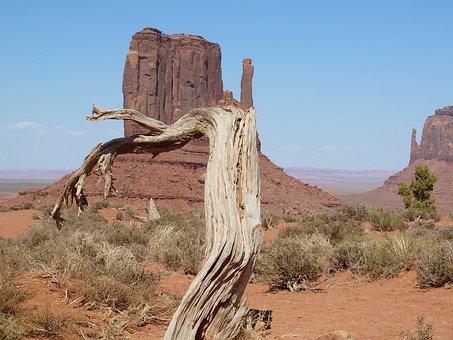 Monument Valley, Tree, America, Arizona, Landscape