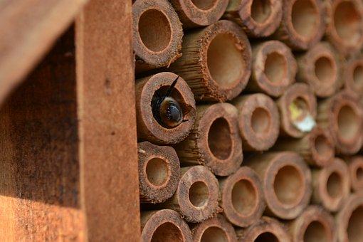 Mason Bee, Bee, Osmia, Insect House, Bamboo