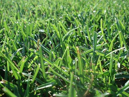 Lawn, Grass, Turf, Mow, Green Grass, Environment, Green