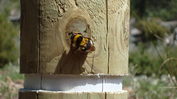 Bee, Post, Animal, Nature, Insects, Mountains, Hiking
