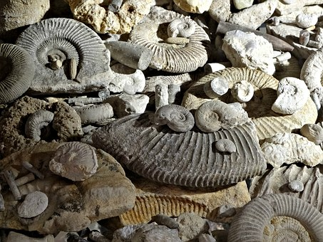 Fossils, Prehistory, Ammonites, The Museum