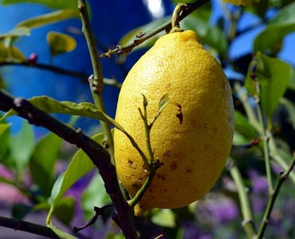 Lemon, Citrus Fruits, Lemon Tree, Mediterranean, Yellow