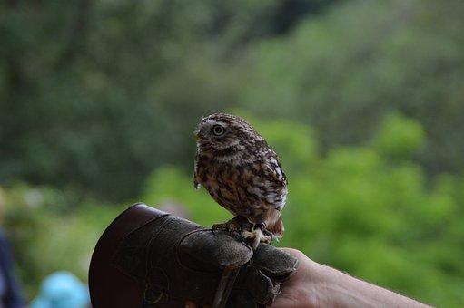 Bird, Owl, Nature, Animal World, Eyes, Plumage, Feather