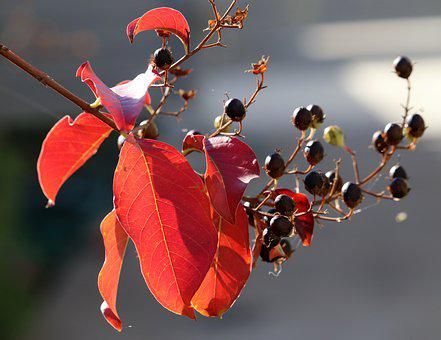 Leaves, Seeds, Branch, Autumn, Colorful, Tree, Garden