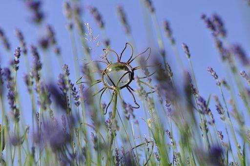 Lavender, Plant, Garden, Deco, Nature, Flowers, Purple
