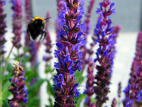 Hummel, Nature, Insect, Blossom, Bloom, Plant