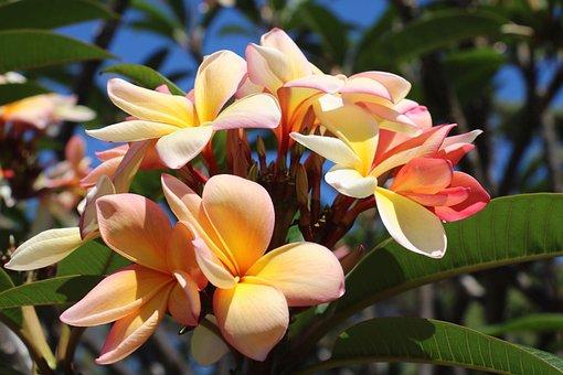 Flower, Petal, Orange, Summer, Garden, Plant, Leaf
