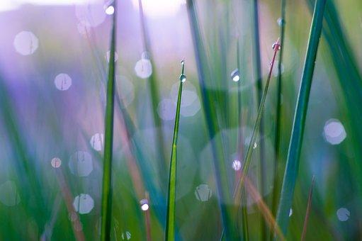 Nature, Grass, Bokeh, Macro, Light, Background