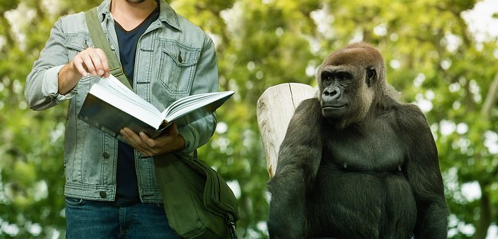 Learn, Student, Monkey, Book, Read, Education