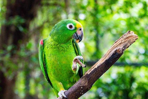 Parrot, Bird, Colorful, Green, Ara, Nature, Plumage