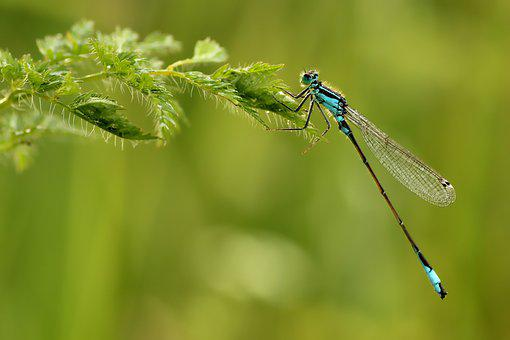 Unlucky Dragonfly, Small, Dragonfly, Insect, Nature