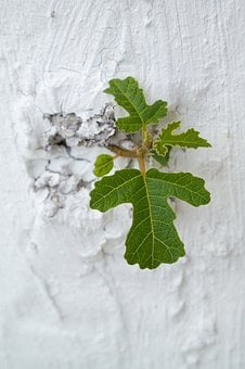 Leaf, Wall, Leaves, Nature, Green, Plant, Texture