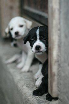 Dog, Small, Puppy, Cute, Pet, Animal, Young, Sweet