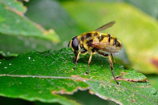 Wasp, Insect, Nature, Close Up, Animal World