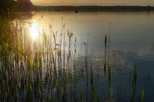 Lake, Sunset, Reed, Backlighting, Water, Nature