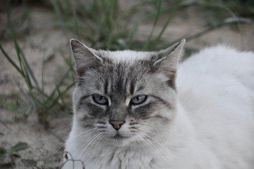 Cat, Feline, Mammal, Animal, Eyes, Mustache Cat