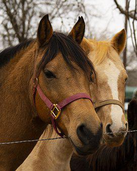 Horses, Animal, Horse, Nature, Equestrian, Western