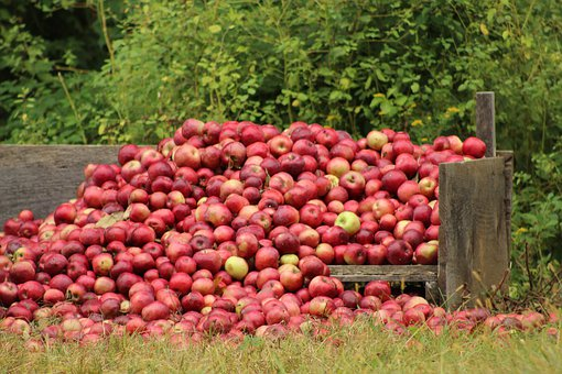 Apples, Fall, New England, Autumn, Apple, Fruit
